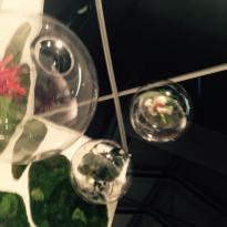 """""""Green Planets, Claudia Bonollo"""