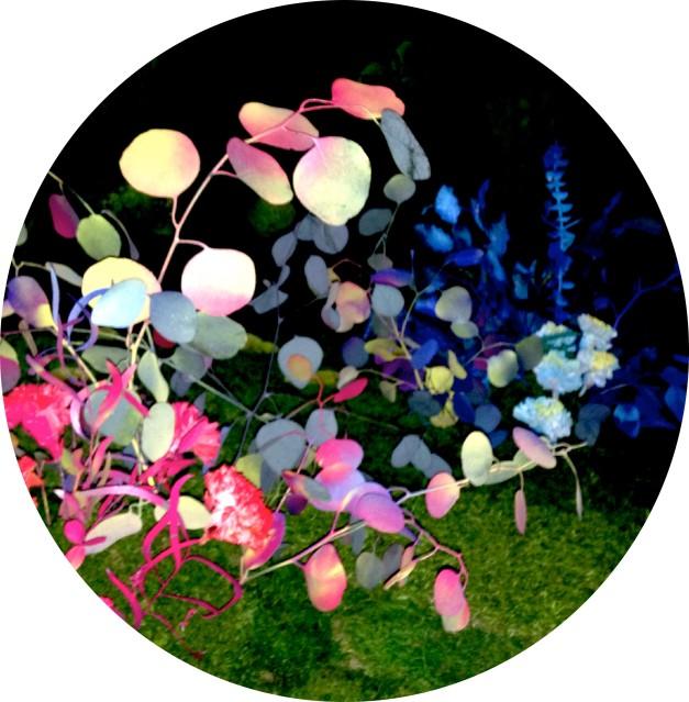 jardinclorofila