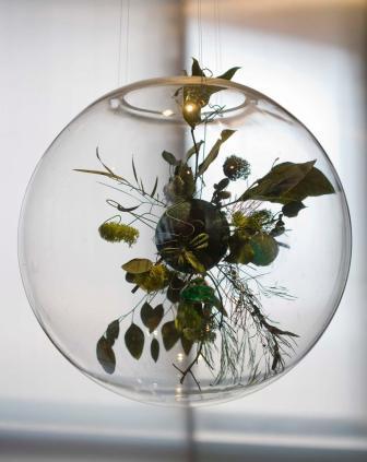 planetas vegetales, Claudia Bonollo