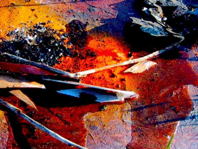 combustioni cromatiche, Claudia Bonollo