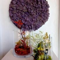 Jardines de Adonis, Claudia Bonollo